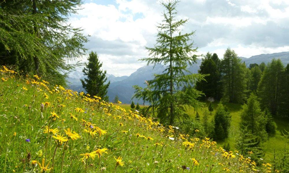 Wanderurlaub in Südtirol | Wandern auf der Villanderer Alm